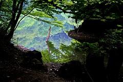 Reflection world (tez-guitar) Tags: water pond reflection reflections lake world heritage mountain highland forest wood aomori tohoku