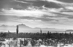 Desert Home (Erin Claassen Photography) Tags: travel vacation cactus bw house holiday mountains home clouds landscape mexico desert wanderlust traveller adventure bajacalifornia shack bajacaliforniasur bcs traveler travelphotography