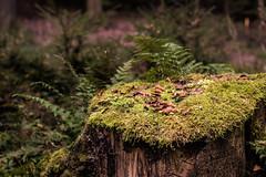 Baumstamm in der Morgensonne (stefanueberlein) Tags: sonne baum nikon baumstamm landschaft landscape natur nature moos wood forest holz