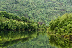 all green (MrtBzts) Tags: green nature tree lake mount nikon d7200 tamron