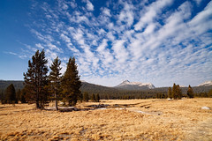 Cathedral Peak from the meadow (beyondramen) Tags: tuolumnemeadows yosemite
