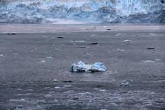 IMG_0486 (EliaZane) Tags: alaska glacier mendenhall sea ocean ice blue cruise