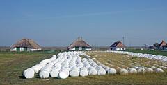 puszta, Hortobgyi Halast Hungary (peter.velthoen) Tags: platteland countryside boerenland landschap puszta poesta magyarorszg goulash hortobgynationalpark graslandschap steppe