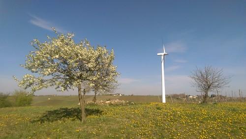 Windrad bei Zornheim