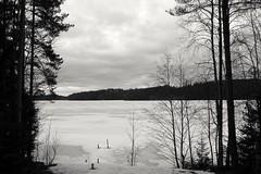 Frozen lake (beheshte_m) Tags: sky blackandwhite lake snow tree ice monochrome canon finland skyscape landscape mono frozen blackwhite nopeople nordic ruovesi lakescape