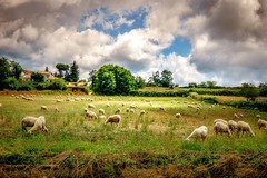 ITALY- The land God painted (Mickey Katz) Tags: travel blue vacation sky italy beautiful beauty field grass clouds countryside photo amazing europe italia awesome culture dramatic tourist agriculture herd breathtaking freen bestshot supershot flickrsbest amazingphoto abigfave anawesomeshot artistsoftheyear overtheexcellence flickrlovers breathtakinggoldaward