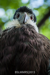 Hey you with the funny face (Bas Lammers) Tags: city berlin bird germany zoo citycenter tiergarten