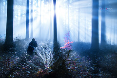 Ante la luz (Jabi Artaraz) Tags: light helecho contraluz jon bosque zb bizkaia haya bruma argia basoa abetos garoa euskoflickr jartaraz aldoia