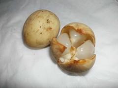 Duku palembang (Nelindah) Tags: lanzones duku meliaceae geo:country=indonesia taxonomy:family=meliaceae taxonomy:binomial=lansiumdomesticum nelindah benqac100