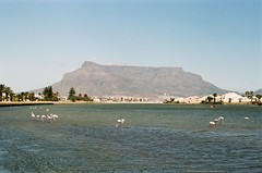 Table Mountain and Flamingos (rjmiller1807) Tags: pink holiday southafrica flamingoes march capetown tablemountain milnerton westerncape 2015