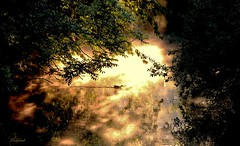 matin de mai (ladyhawk2013fev12) Tags: soleil rivire reflets brume matin