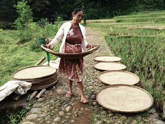 Padi Kampung Naga (Andy Yoes Nugroho) Tags: people java rice padi perempuan tasikmalaya jawabarat kampungnaga
