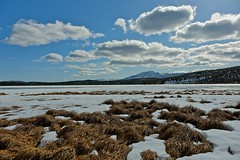 Lumpy Grass and Lumpy Clouds (MIKOFOX  Thanks for Visiting!) Tags: lake ice clouds landscape spring yukon april snowmelt borealforest xt1 minersrange fujifilmxt1 xf18135mmf3556rlmoiswr screwtheautotagbot littlepeakmt