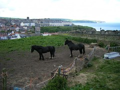 Whitby, North Yorkshire, two horses in donkey field overlooking harbour (rossendale2016) Tags: sea two horses field harbour yorkshire north donkey whitby overlooking