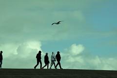 walk (bies) Tags: friends people holland netherlands dutch walking seaside walk gull zeeland tourists walkers dike westkapelle seadike