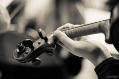 Le violon (LACPIXEL) Tags: music monochrome nikon flickr hand main violin musica mano fx cham musique orchestre orquesta violon d4s nikonfrance lacpixel