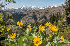 Iron bear trail (Todd Marzano) Tags: 2 mountain snow mountains nature forest landscape mark olympus omd m43 em5 em5ii