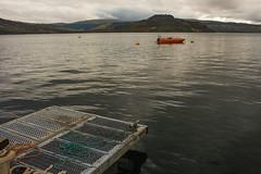 IMG_5585 (Rebecca-Gibson) Tags: trip nature ecology photography scotland wildlife conservation science adventure loch biology isle pontoon carna sunart rewilding
