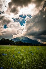_MG_7646 (TobiasW.) Tags: blue field weather clouds feld wolken blau wetter cornflowers cornflowerfield kronblumen kronblumenfeld