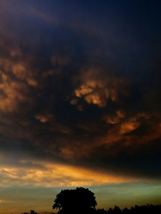 One of these days... (Robyn Hooz (away)) Tags: piovedisacco mammatus tramonto temporale nuvole clouds mare albero luce pioggia contrast