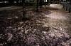untitled (keitaro hirosaki) Tags: street japan gr ricoh okayama 街角 岡山 streetsnap 街撮り