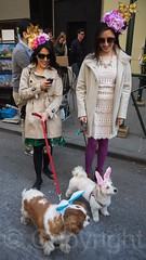 2015 New York City Easter Parade and Bonnet Festival (jag9889) Tags: nyc newyorkcity usa dog ny newyork hat animal festival easter costume unitedstates manhattan unitedstatesofamerica 5thavenue canine parade midtown fifthavenue creature bonnet k9 2015 jag9889 20150405