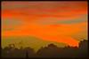 Orange sunset cloudscape (Zelda Wynn) Tags: sunset orange nature weather clouds auckland paintedsky troposphere westauckland weatherwatch zeldawynnphotography