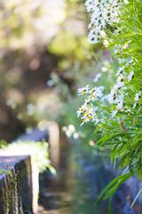 Levada (Katka S.) Tags: flowers flower portugal nature water island stream dof band unesco 25 bloom shallow madeira levada archipelago reservation fontes blowwom