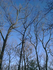 Untitled (pedrik) Tags: trees sky usa phonecam connecticut farmington photoeditor htconex 1023652015