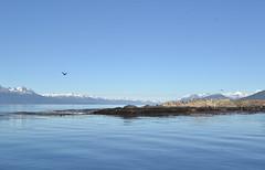 Canal Beagle (Jorgelina Dromedari) Tags: patagonia beagle argentina les faro tierradelfuego ushuaia puerto canal martial ciudad paisaje postal montaa baha austral findelmundo canalbeagle leseclaireurs claireurs