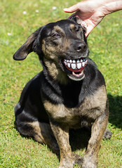 [Explore] I thought this was a good idea (Christine Schmitt) Tags: dog ball teeth explore hund zähne explored dogchal