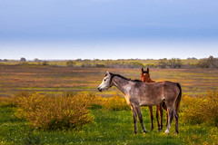 IMG_3390.jpg (Melinda Ledsome) Tags: ranch horses horse southwest nature field sanantonio rural america fence landscape outside countryside spring oak cowboy texas natural folk farm live wildlife country hill scenic pasture hillcountry picturesque springflowers equine texan springtime countrylife medow fenceline texashillcountry countyroads springtimeflowers texasphoto texaslandscapephotography texasnaturephotographer texastravelphotography texasimages texasnaturephotography texaslandscapephotos texaslandscapeimage texaslandscapephotographer texaslandscapepicture texasnatureimage texasnaturephoto texasnatureprints texasnaturestockimage texasnaturestockphoto texasnaturestockphotography texasnaturestockpicture texaspicture texasscenicimage texasscenicphoto texasscenicphotography texasscenicpicture texasscenicprints texasscenicstockimage texasscenicstockphoto texasscenicstockphotography texasscenicstockpicture texastravelimage texastravelphoto texastravelpicture texastravelprints texastravelstockimage texastravelstockphoto texastravelstockphotography texastravelstockpicture