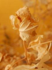 (Landanna) Tags: texture yellow geel gul textuur driedleaves gedroogdebladeren