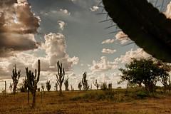 Paisagem do semi rido (brasildagente) Tags: paisagem bahia eds cactos cisterna prefs semirido autorizada