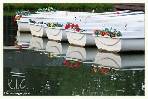 Rosarium Baden bei Wien, 'komm, lass uns rudern gehen' | 2014-06
