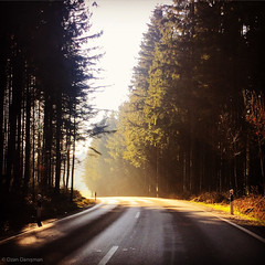 Abendsonne (Ozan) Tags: bayern sonnenuntergang natur oberbayern sonne wald abendsonne sonnenlicht chiemgau strase halfing landkreisrosenheim hslwang