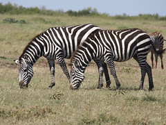 HD Images of the Wild Animals, Wallpapers and backgrounds - Part 7 (PhotographyPLUS) Tags: pictures graphics photos illustrations images stockphotos articles footage stockimage freephoto stockphotograph