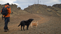4mai_Thorbjorn_031 (Stefn H. Kristinsson) Tags: dog mountain dogs iceland spring hiking may ma vor hundur sland ganga fjallganga tamron2875mm grindavk hundar grindavik orbjrn nikond800 thornbjorn orbjarnarfell
