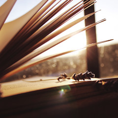 Turn the Page (Marek Kalich) Tags: sunset stilllife sun reading book words mood pages sunny read list page herb
