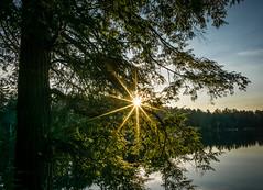 the old hemlock (muskokaTIMe) Tags: lake tree sunrise sunburst hemlock sunstar