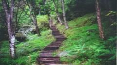 DSC07467 (yongheecs永和社大生態保育社) Tags: 林場