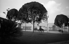When Even the Trees Need Shade (shudaizi) Tags: developer xtol leicasummicron35mmf20asph lens genre street chongqing china efke25 trees 2014 cities asia m6 blackandwhite places film