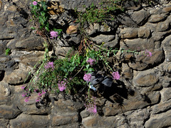 Len. Pigeon hiding in old city wall. (Sharon Frost) Tags: travel spain pigeons citywalls len