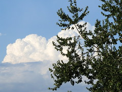 Cloud Behind A Tree. (dccradio) Tags: trees sky cloud tree clouds nc northcarolina bluesky greenery cloudformation clearsky lumberton robesoncounty walnutmanorapartments