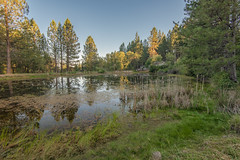 RHM_2441-1534.jpg (RHMImages) Tags: california trees foothills house water reflections landscape us nikon unitedstates sierranevada grassvalley nevadacounty d810 dogbarroad bylt bearyubalandtrust mathispond