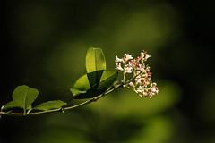 - (marco soraperra) Tags: wood light shadow flower tree texture leaves forest dark licht nikon ast bright bokeh nikkor leafs wald schatten baum muster