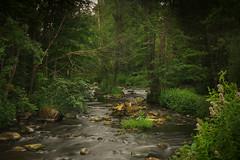 Karlslund stream (Anders Nordquist) Tags: longexposure water stream sweden rebro karlslund canoneos7d sigma1750mmf28