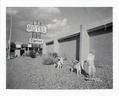Gallup, NM (moominsean) Tags: polaroid 190 instant type667 expired022009 newmexico gallup southwest route66 motel elcapitan statue burro