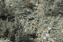 A tu się ukryłyście... (czargor) Tags: outdoor inthemountain mountians landscape nature tatry mountaint igerspoland