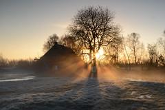 Morninglight (Rene Mensen) Tags: morning light tree nikon rene thenetherlands nikkor moor huisje drenthe mensen bargerveen zwartemeer d5100 uneken huisjevanuneken
